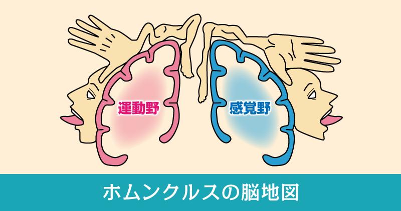 ホムンクルスの脳地図